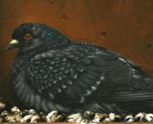 Pigeon nest thumbnail