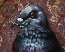 pigeon thumbnail